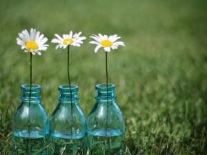 Postal: Una margarita en cada botella de vidrio