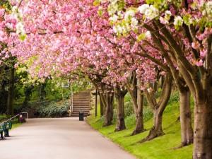 Árboles florecidos en primavera
