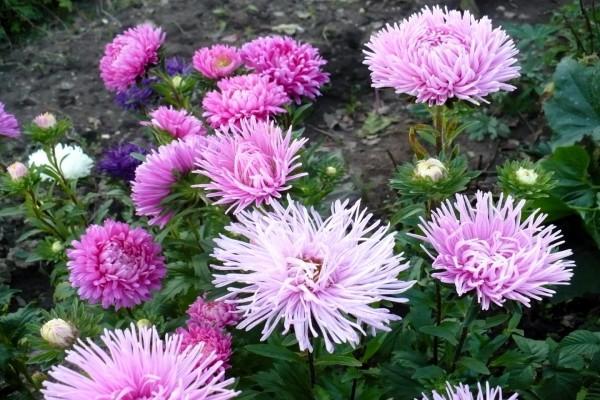 Flores plantadas en el jardín