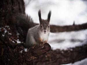 Ardilla en el frío invierno