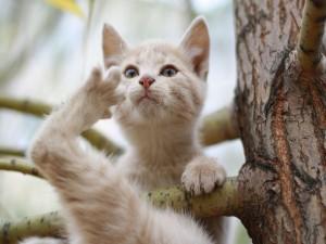 Un gato en las ramas del árbol