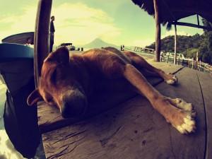 Un perro dormido en el muelle
