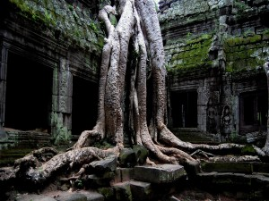 Postal: Las raíces de un gran árbol entre las ruinas del templo (Ankor)