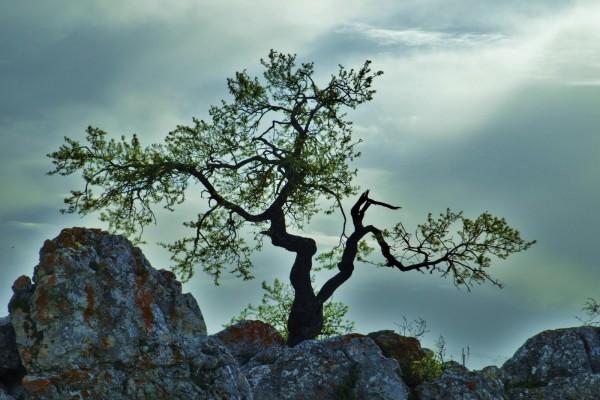 Árbol en las rocas