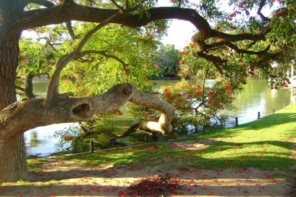 Un gran árbol junto al lago