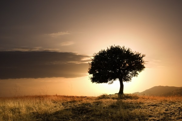 Árbol al atardecer