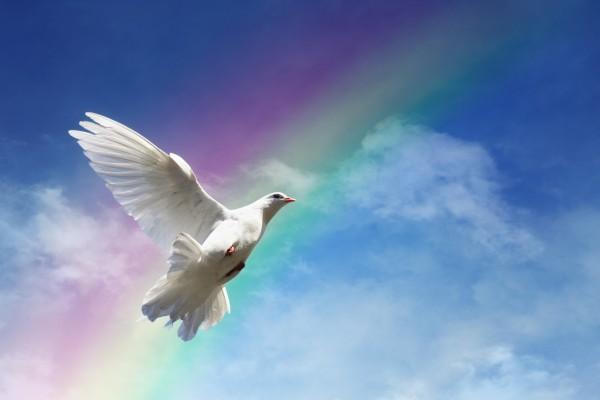 Paloma volando frente a un arco iris