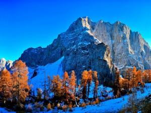 Nieve y árboles otoñales en la montaña