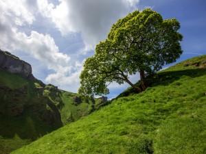 Árbol con hojas verdes en la ladera de la montaña