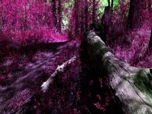 Troncos caídos en el bosque