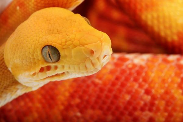 Una bonita serpiente naranja
