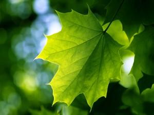 Hoja verde en la rama del árbol