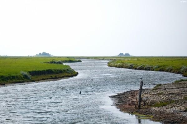 Río en un entorno natural