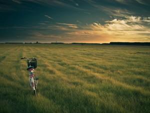Postal: Una bicicleta sobre la hierba