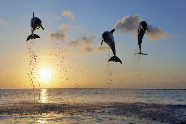 Delfines en el aire al atardecer