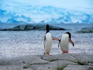 Postal: Dos pingüinos en la roca