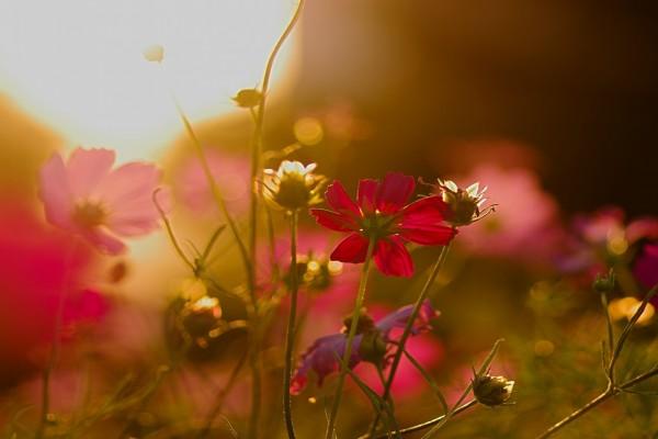 Flores iluminadas al atardecer