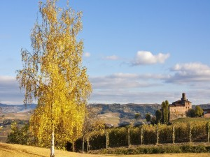Postal: Árbol con hojas amarillas en el campo