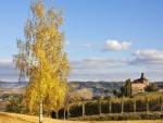 Árbol con hojas amarillas en el campo