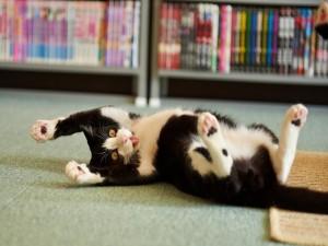 Gato estirándose en el suelo
