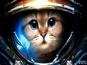 Gato astronauta