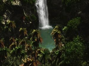Cascada entre palmeras