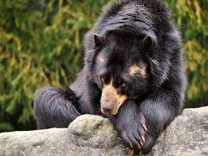 Postal: Un oso triste