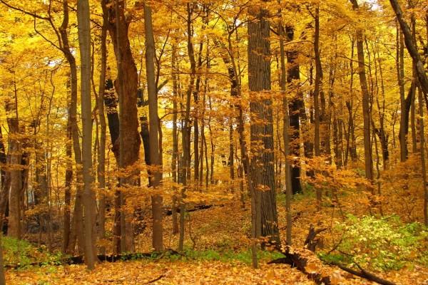 Un bosque con los colores del otoño