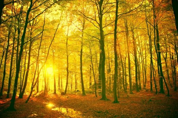 El sol iluminando el bosque