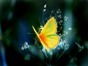 Postal: Mariposa amarilla sobre la flor