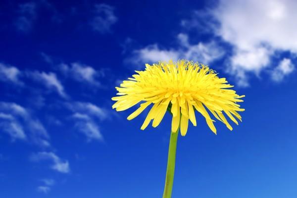 Una flor amarilla y el cielo azul