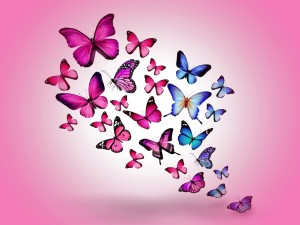 Postal: Conjunto de mariposas en fondo rosa