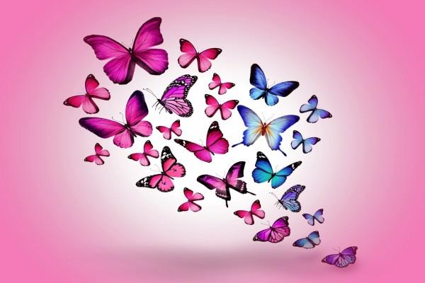 Conjunto de mariposas en fondo rosa