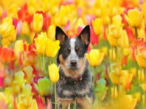 Perrito entre tulipanes