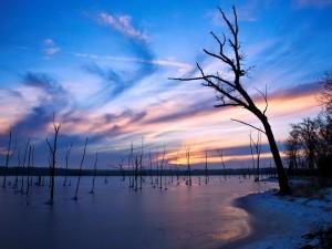 Árboles en el agua helada