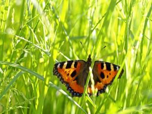 Una mariposa en la hierba