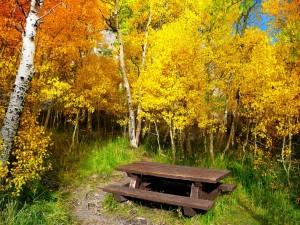 Postal: Mesa de madera entre los árboles