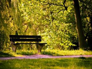 Postal: Un banco a la sombra de los árboles