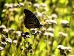 Una mariposa quieta