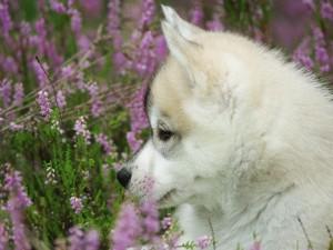 Perro mirando las flores