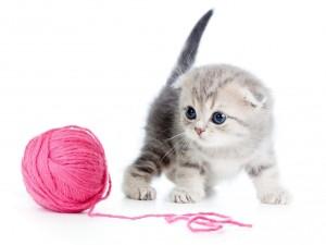Postal: Gato jugando con un ovillo de lana