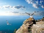 Gaviotas volando sobre el mar y las rocas
