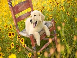 Perro en una vieja silla rodeado de flores