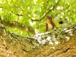 Postal: Una bonita ardilla en el árbol
