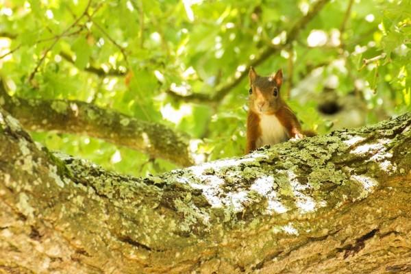 Una bonita ardilla en el árbol
