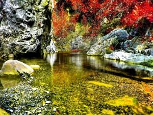 Piedras en el fondo y orilla del río