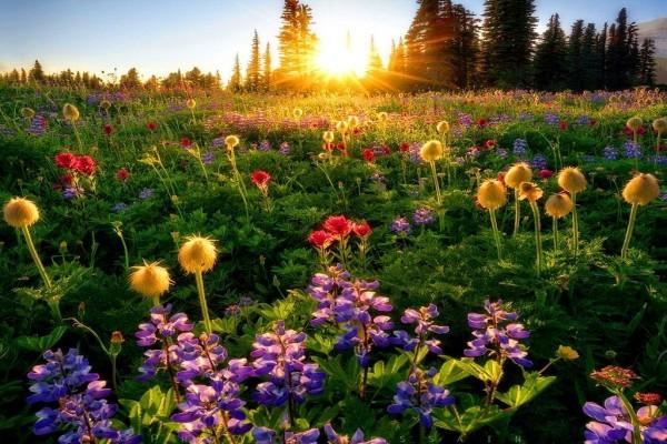 Bonito día de primavera