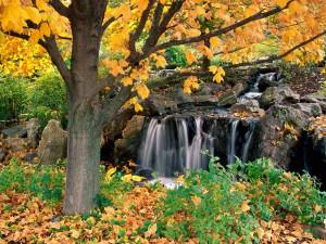 Postal: Cascada y árbol en otoño