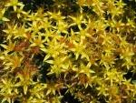 Grupo de bonitas flores amarillas