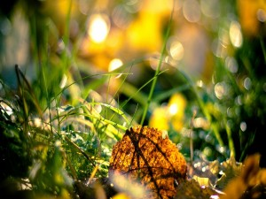 Postal: Hojas secas sobre la verde hierba